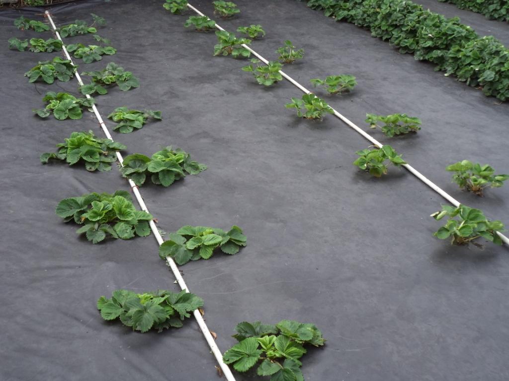 Рентабельность бизнеса по выращиванию роз 83